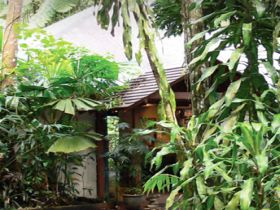 Heritage Lodge and Spa - In the Daintree - tourismnoosa.com