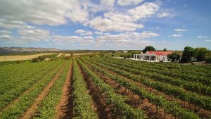 1837 Barossa Luxury Vineyard Cottages - tourismnoosa.com