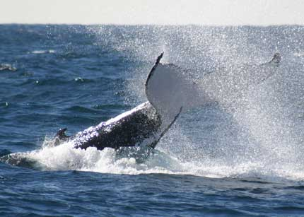 Whale Watching Sydney - tourismnoosa.com
