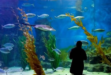 Melbourne Aquarium - tourismnoosa.com