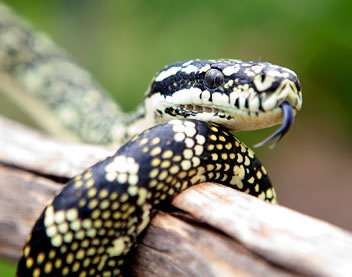 Reptile Encounters - tourismnoosa.com