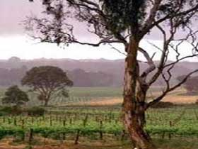 Yangarra Estate Vineyard - tourismnoosa.com