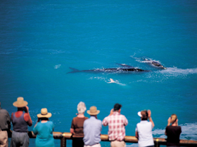 Whale Watching At Head Of Bight - tourismnoosa.com