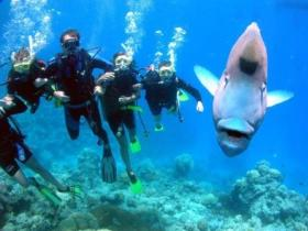 Jew Shoal Dive Site - tourismnoosa.com
