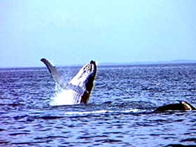 Whale Watching - tourismnoosa.com