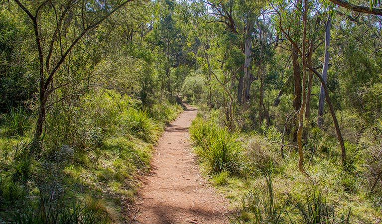 Mares Forest Creek walking track - tourismnoosa.com