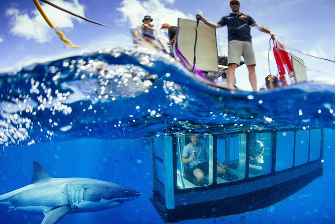 White Shark Tour with Optional Cage Dive from Port Lincoln - tourismnoosa.com