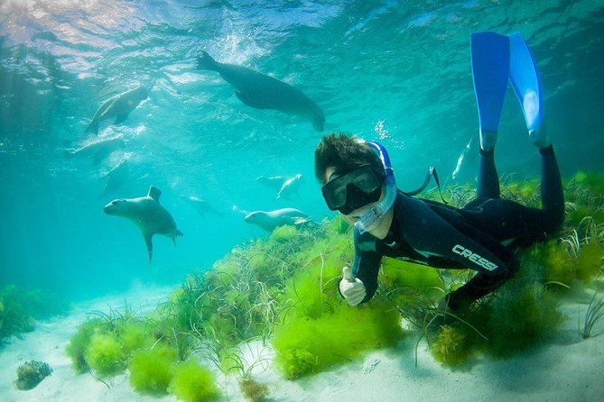 Half-Day Sea Lion Snorkeling Tour from Port Lincoln - tourismnoosa.com