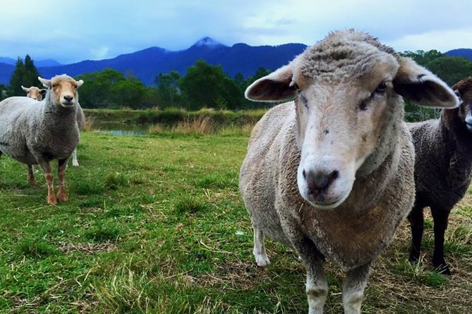 Trevena Glen Farm Animal Experience - tourismnoosa.com