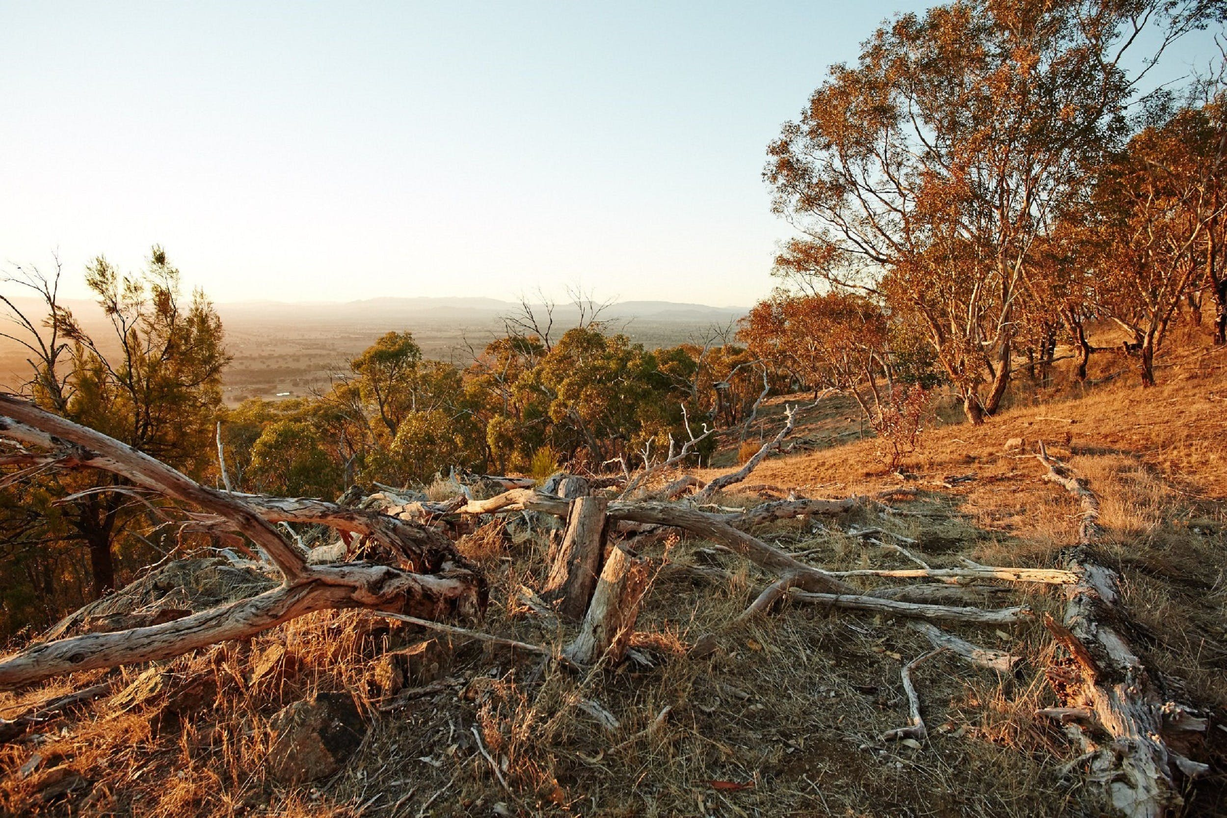 Chick Hill Walk - tourismnoosa.com