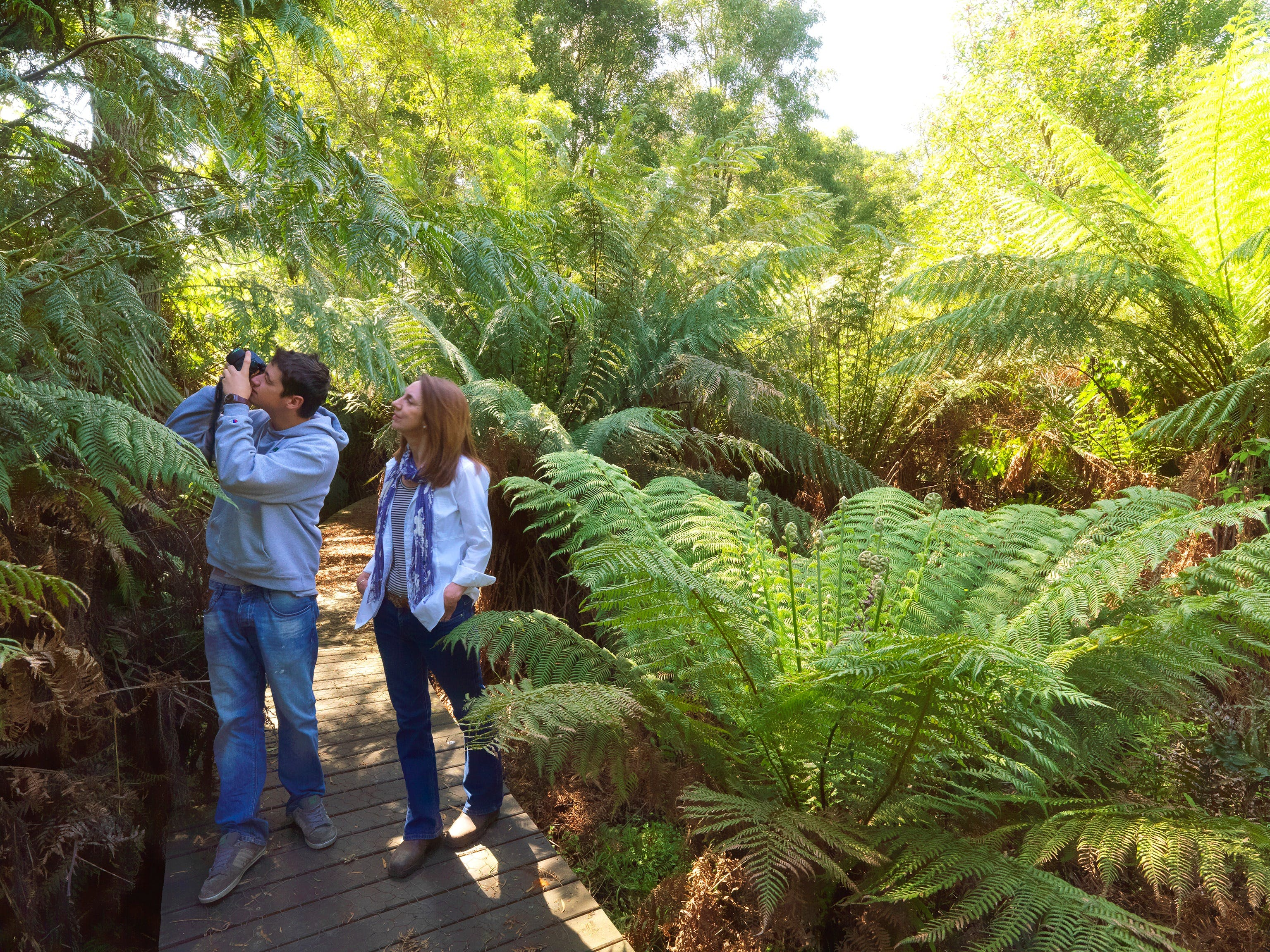 Endeavour Fern Gully Walks - tourismnoosa.com